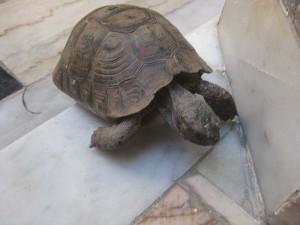 mb5 tortoise